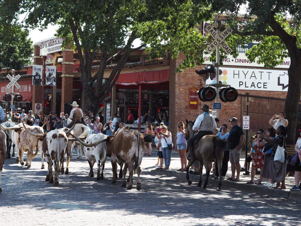 Karjanajo Teksasilaiseen tyyliin
